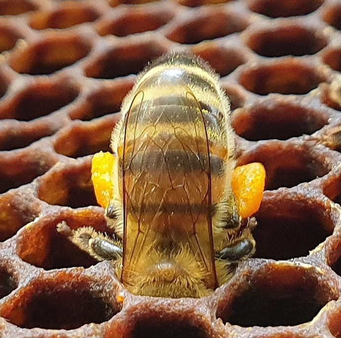 TO BEE OR NOT TO BEE, THAT IS THE CRISIS