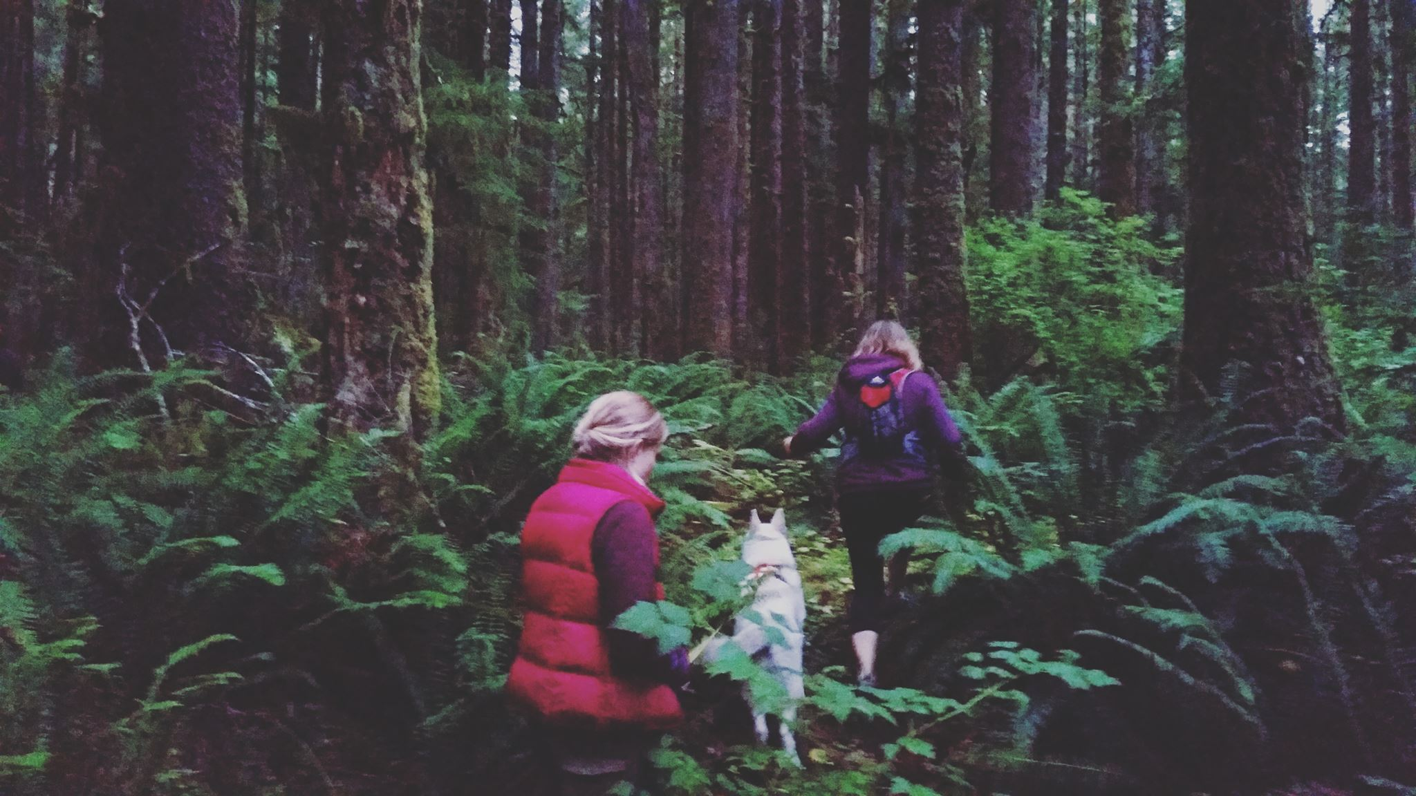 alissa katie and brite members the we are wildness rewilding their lives while walking in the woods