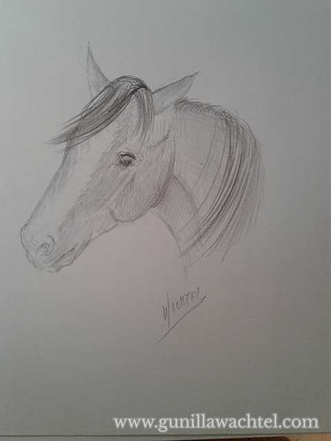 Sketchbook Sunday - Horse Concept Sketch