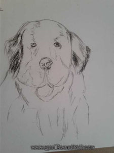 Pages from the Sketchbook - Newfoundland Dog
