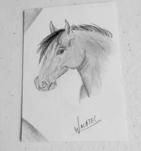 ACEO horse drawing
