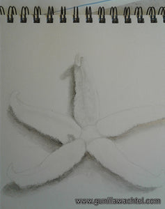 Starfish Drawing Artwork in Progress