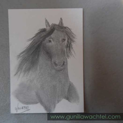 ACEO original pencil drawing of a Friesian Horse - Gunilla Wachtel