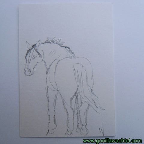 Daily Drawing 27 Horse ACEO pencil drawing Gunilla Wachtel