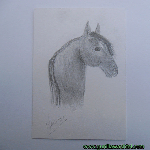 ACEO horse drawing pencil art Gunilla Wachtel
