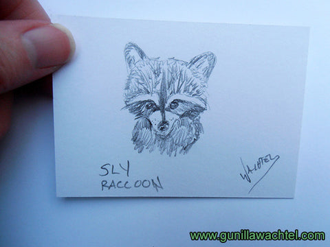 Raccoon wildlife art drawing Gunilla Wachtel Art
