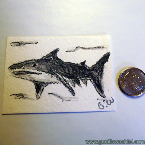 ACEO original shark drawing quarter for size comparison - Gunilla Wachtel