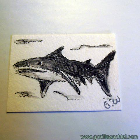 ACEO original shark drawing Gunilla Wachtel