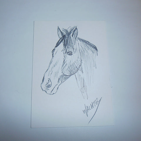 ACEO horse pencil drawing Gunilla Wachtel