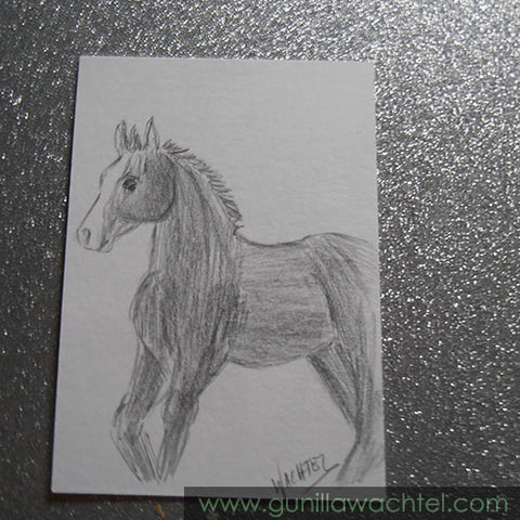 ACEO art card horse drawing Gunilla Wachtel