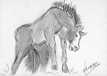 Daily drawing 21 - ACEO horse drawing