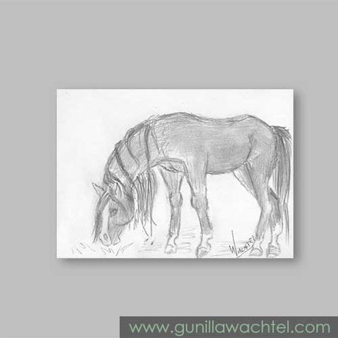 Original Horse Pencil Daily Drawing 12 - Art - Gunilla Wachtel