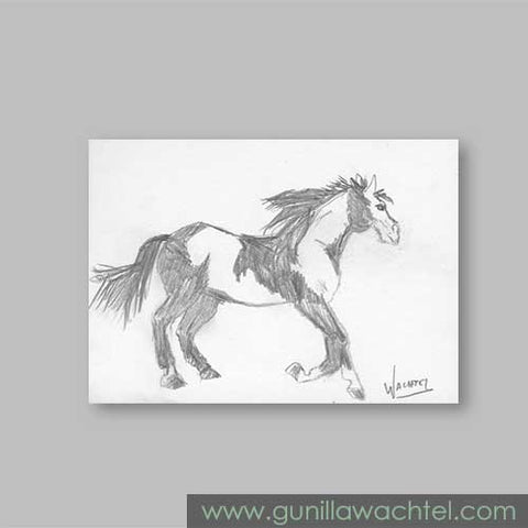 Paint Horse Original Pencil Drawing ACEO Gunilla Wachtel