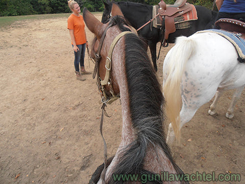 Horseback riding Trail Ride Kanweienea Kreations