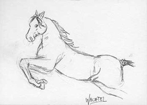 Artist Gunilla Wachtel ACEO card horse daily drawing