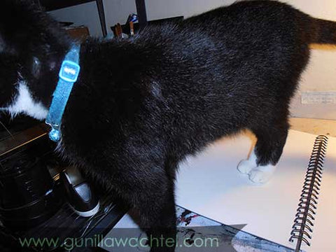 Tuxedo Kitty Blazey on the Drafting Table