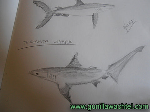 Sharks from the Sketchbook - Gunilla Wachtel