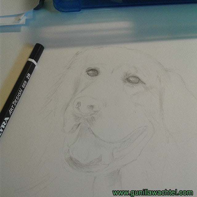 Golden retriever pencil drawing dog art Gunilla Wachtel