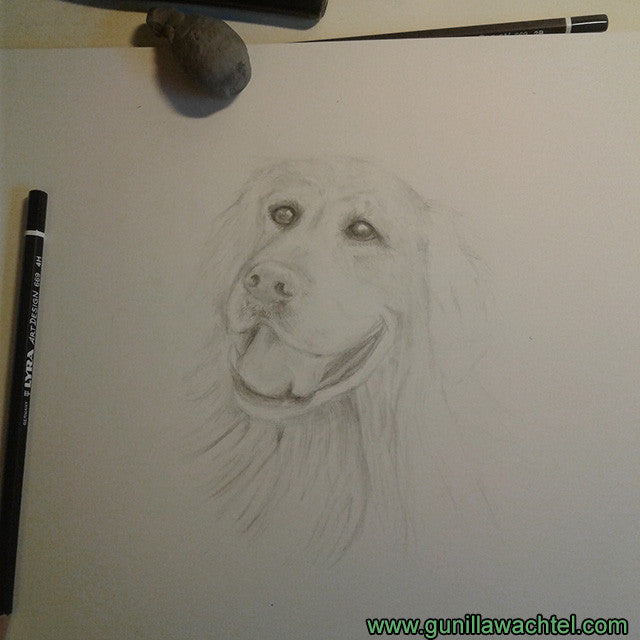 artwork in progress pencil dog drawing artist art Gunilla Wachtel