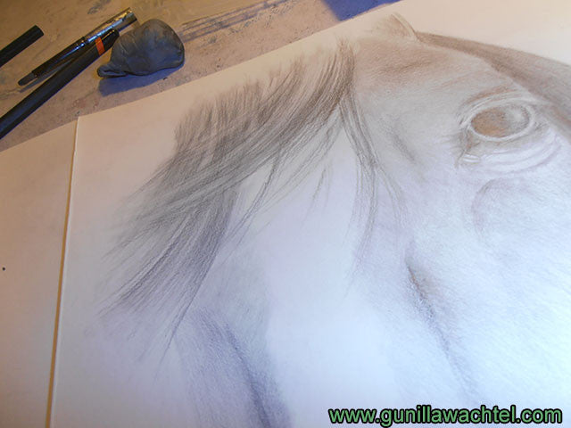 Horse drawing artwork in progress - Gunilla Wachtel