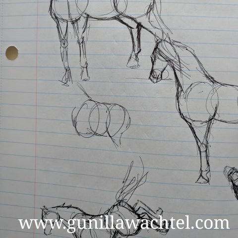 Horse sketches by Gunilla Wachtel