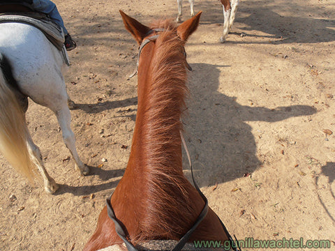 The photographer's horse on the trail ride - LRD