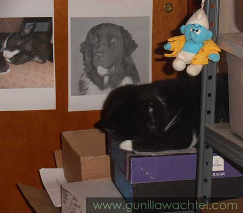 Tuxie Snuggled up on a box in the studio Kanweienea Kreations