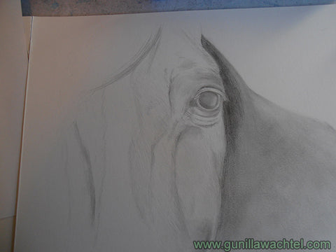Horse Drawing Artwork in Progress Gunilla Wachtel