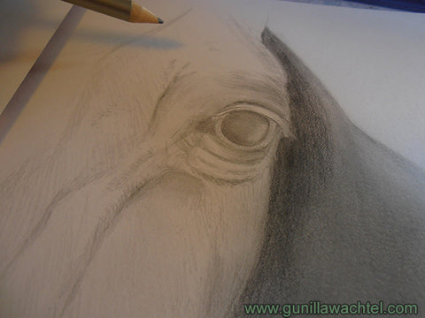 Progress picture of horse pencil drawing - Gunilla Wachtel
