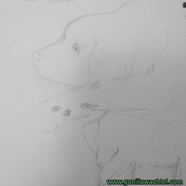 Newfoundland Dog Pencil Sketches Gunilla Wachtel