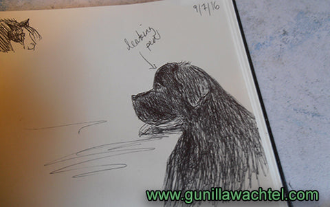 Newfoundland Dog Pen Sketch Gunilla Wachtel