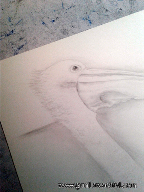 Pelican Pencil Drawing Gunilla Wachtel