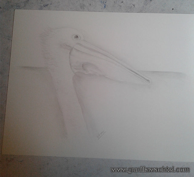 Pelican Bird Drawing by Gunilla Wachtel