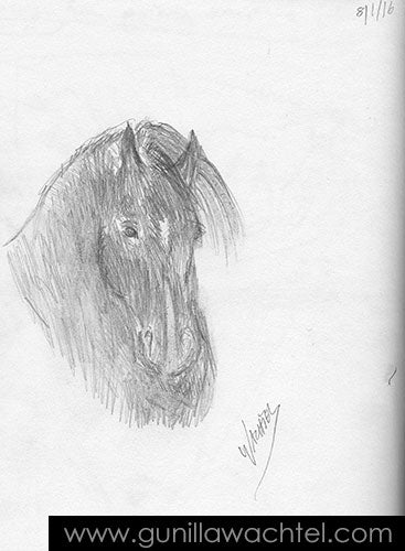 Horse Sketch by animal artist Gunilla Wachtel
