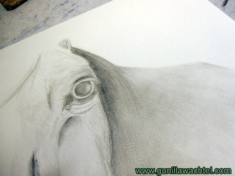 horse drawing artwork in progress pencil art Gunilla Wachtel
