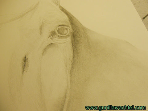 Work in progress horse drawing Gunilla Wachtel