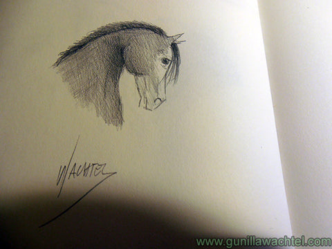Horse Sketch Pages from the Sketchbook Gunilla Wachtel