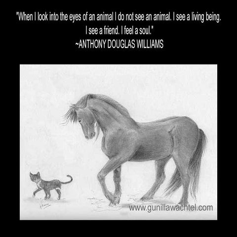 Horse and Cat Pencil Drawing by Gunilla Wachtel