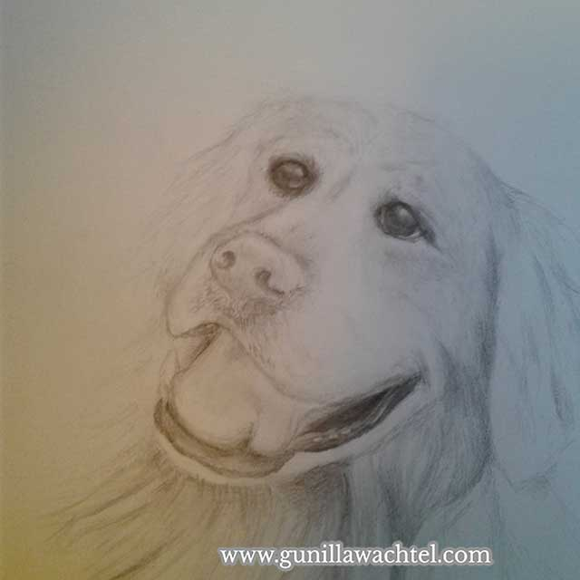 Dog drawing pencil art Gunilla Wachtel Kanweienea Kreations
