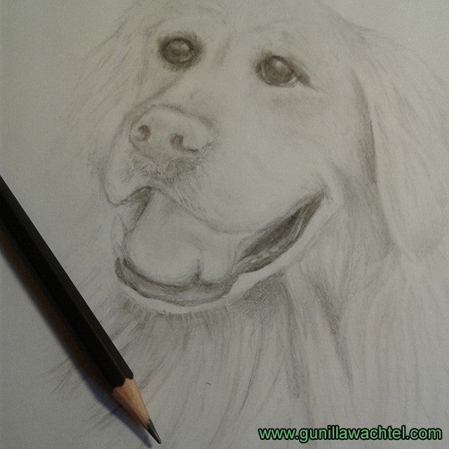 Golden Retriever Art Study Update - Kanweienea Kreations