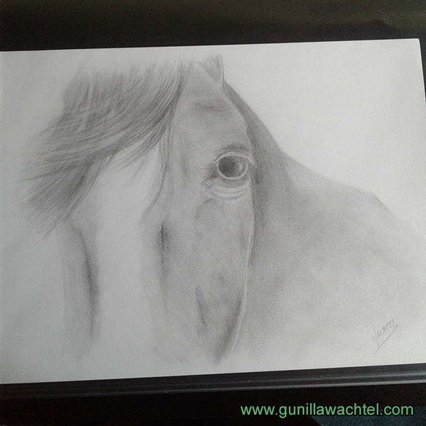 Horse Drawing Gunilla Wachtel Equine and other animal artist Pencil art