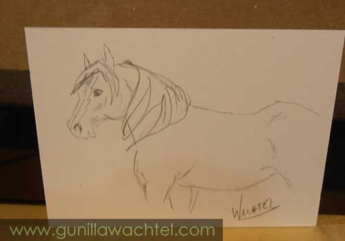 Daily Drawing 11 - ACEO - Gunilla Wachtel - horse sketch