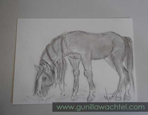 Daily Drawing 12 - ACEO - Gunilla Wachtel - horse drawing