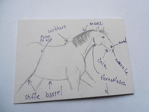 Daily Drawing 32 ACEO horse pencil drawing by Gunilla Wachtel