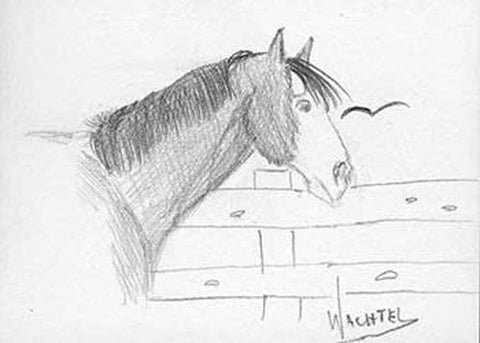 Horse Pencil Drawing Daily Drawing 34. Equine Art by Gunilla Wachtel