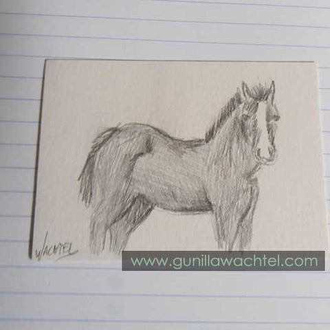 Daily Drawing 9 - ACEO - Gunilla Wachtel