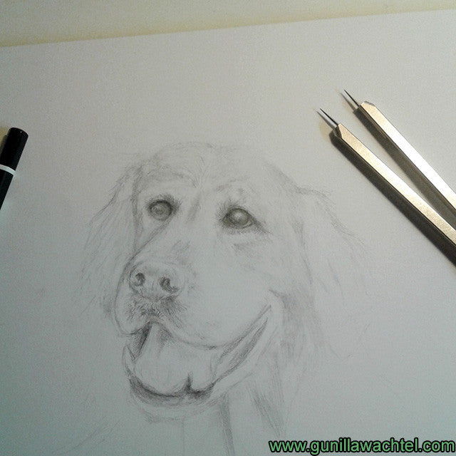 artwork in progress - pencil drawing dog art Gunilla Wachtel
