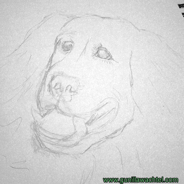Dog Art Study Drawing Artwork in Progress
