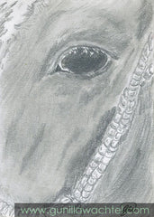 Beauty Original ACEO card Pencil Drawing Horse Gunilla Wachtel
