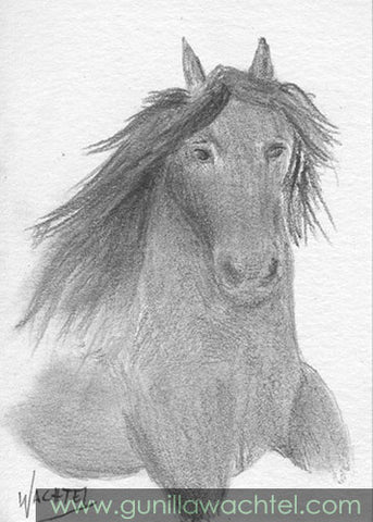 Friesian Horse ACEO Original Drawing Gunilla Wachtel